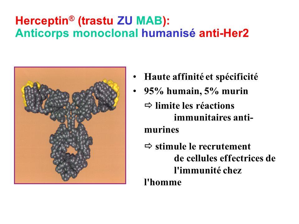 Herceptin ® (trastu ZU MAB): Anticorps monoclonal humanisé anti-Her2 Haute affinité et spécificité 95% humain, 5% murin  limite les réactions immunitaires anti- murines  stimule le recrutement de cellules effectrices de l immunité chez l homme