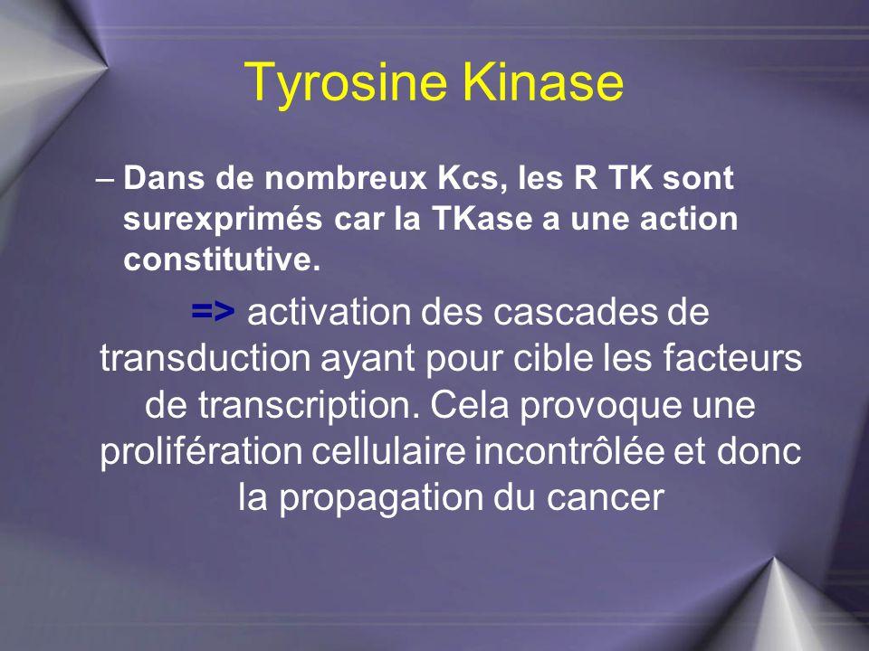 Tyrosine Kinase –Dans de nombreux Kcs, les R TK sont surexprimés car la TKase a une action constitutive. => activation des cascades de transduction ay