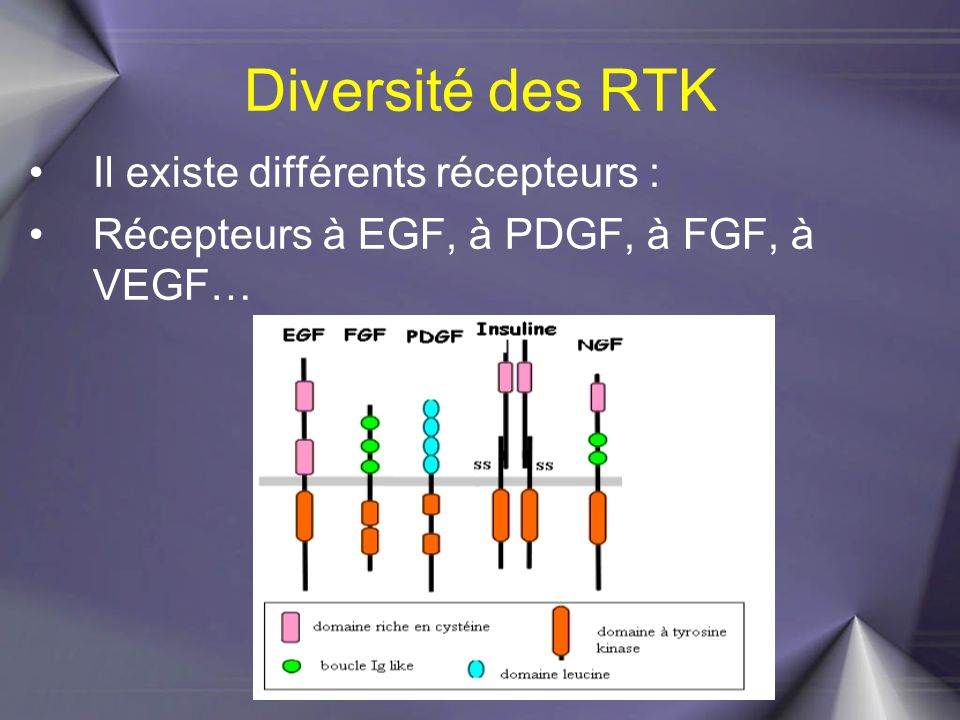 Récepteurs à EGFR: (Epidermal Growth Factor Receptor) : 4 types de récepteurs : HER1, HER2, HER3 et HER4 (également appelés ErbB1, ErbB2, ErbB3 et ErbB4).