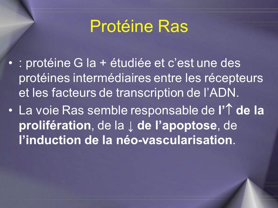Protéine Ras : protéine G la + étudiée et c'est une des protéines intermédiaires entre les récepteurs et les facteurs de transcription de l'ADN. La vo