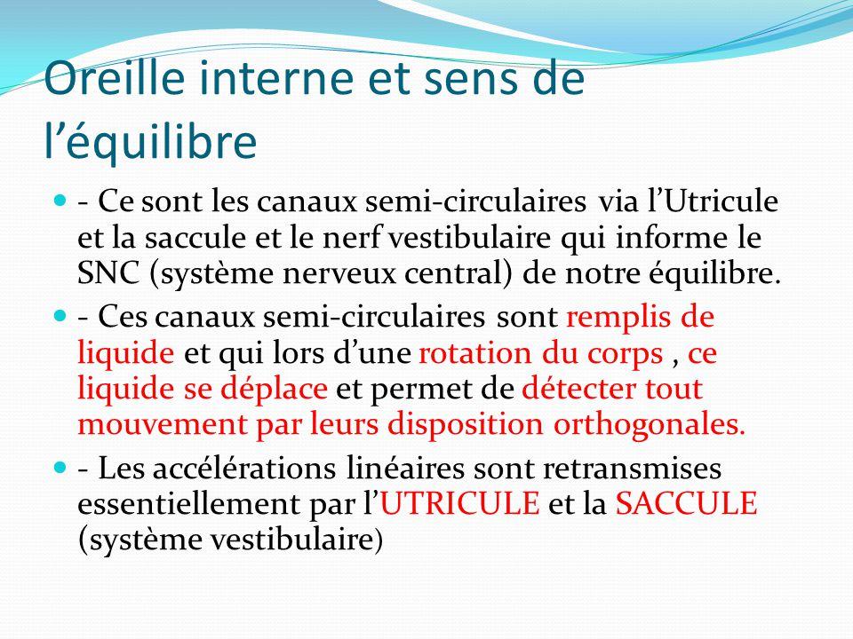 Oreille interne et sens de l'équilibre - Ce sont les canaux semi-circulaires via l'Utricule et la saccule et le nerf vestibulaire qui informe le SNC (système nerveux central) de notre équilibre.