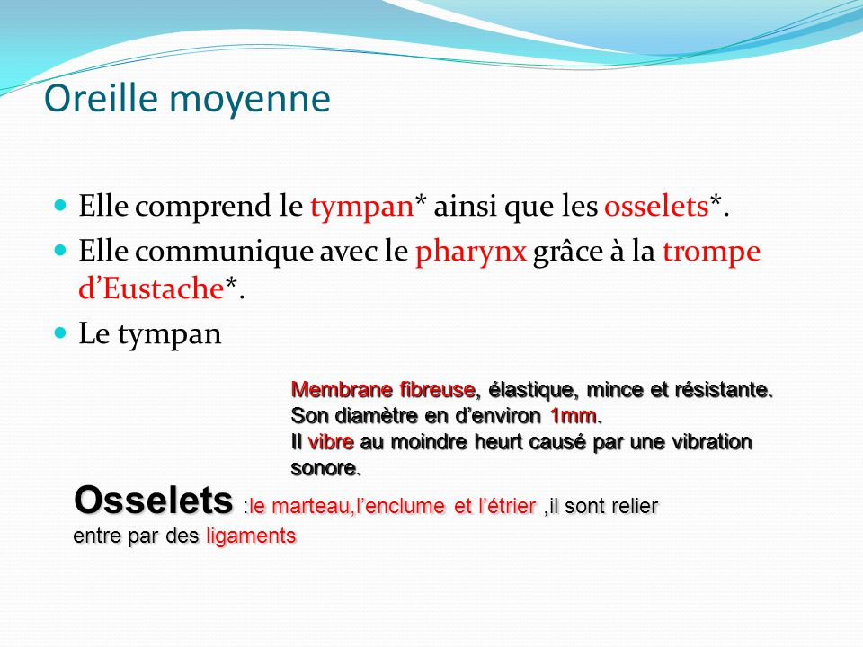Oreille moyenne Elle comprend le tympan* ainsi que les osselets*.