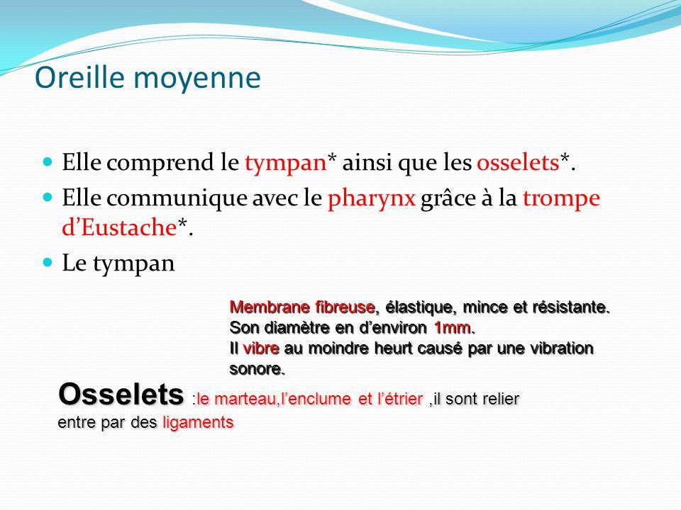b/ OREILLES MOYENNE