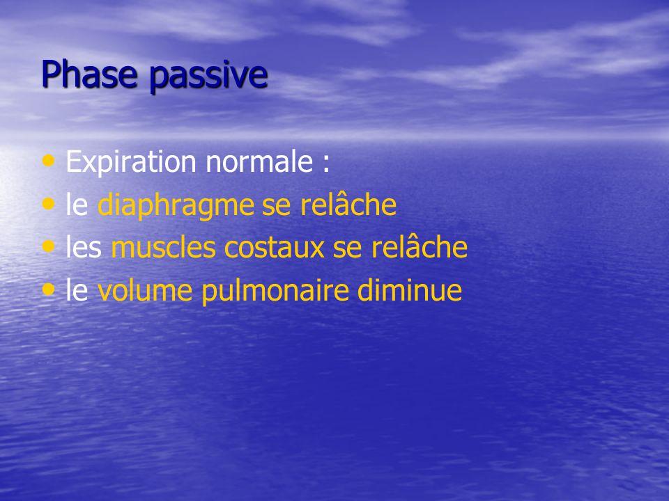 Phase passive Expiration normale : le diaphragme se relâche les muscles costaux se relâche le volume pulmonaire diminue