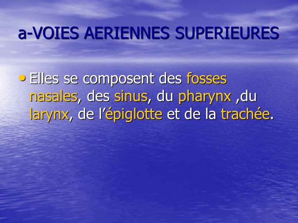 a-VOIES AERIENNES SUPERIEURES Elles se composent des fosses nasales, des sinus, du pharynx,du larynx, de l'épiglotte et de la trachée. Elles se compos
