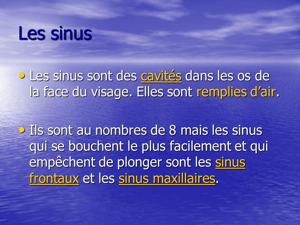 Les sinus Les sinus sont des cavités dans les os de la face du visage. Elles sont remplies d'air. Les sinus sont des cavités dans les os de la face du