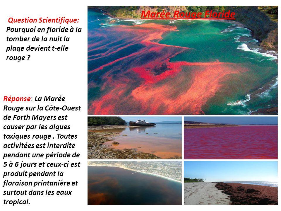 Question Scientifique: Pourquoi en floride à la tomber de la nuit la plaqe devient t-elle rouge ? Marée Rouge Floride Réponse: La Marée Rouge sur la C