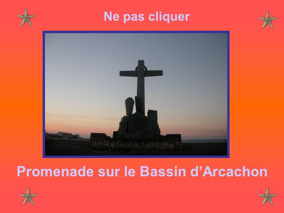 Ne pas cliquer Promenade sur le Bassin d'Arcachon