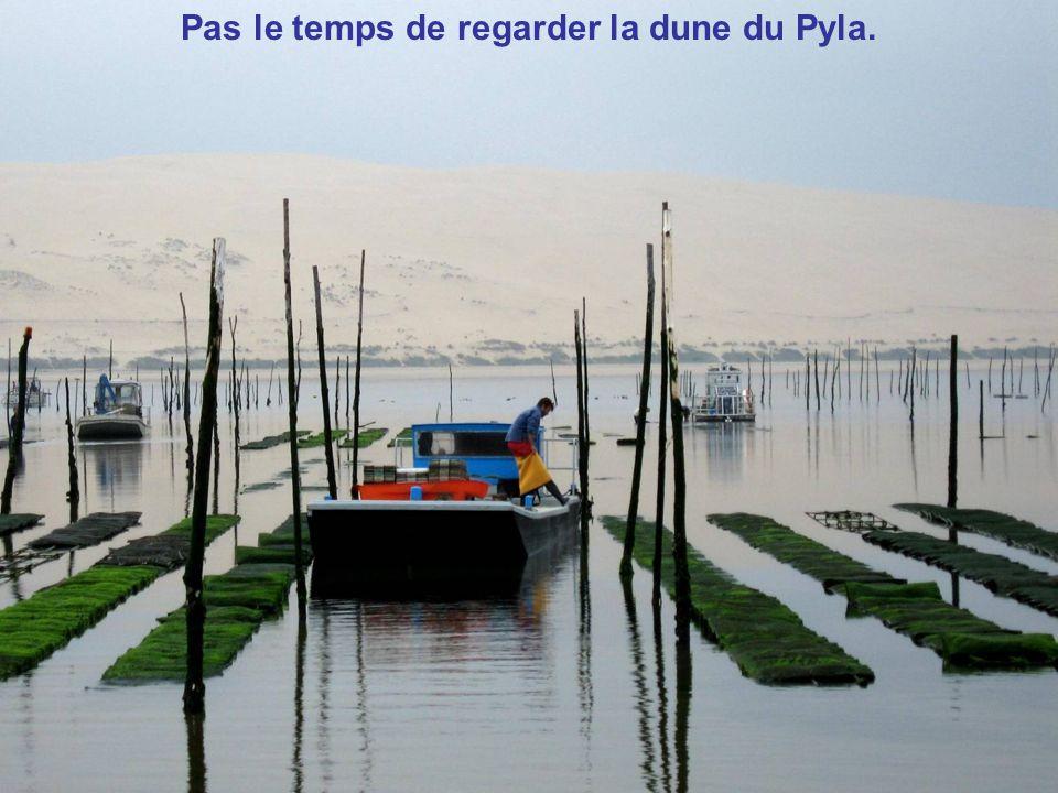 Les parcs à huîtres et la Dune du Pyla
