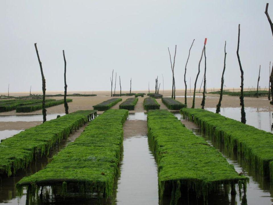 Gujan-Mestras et les pinasses