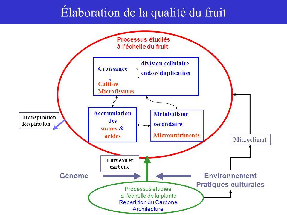 Modèle de division cellulaire 11 33  1  2  3 ii  i jB+1B+221 2j2j 1 cellules B 22 i-1i division croissance Modèle d'endoréduplication 1 2 i32 i i-1 34  1  i-1 22 11 ii  2  3  i ii noyaux 4C noyaux 8C noyaux 2 i C Modélisation de la qualité du fruit Modèles de divisions cellulaires et endoréduplication de l'ADN