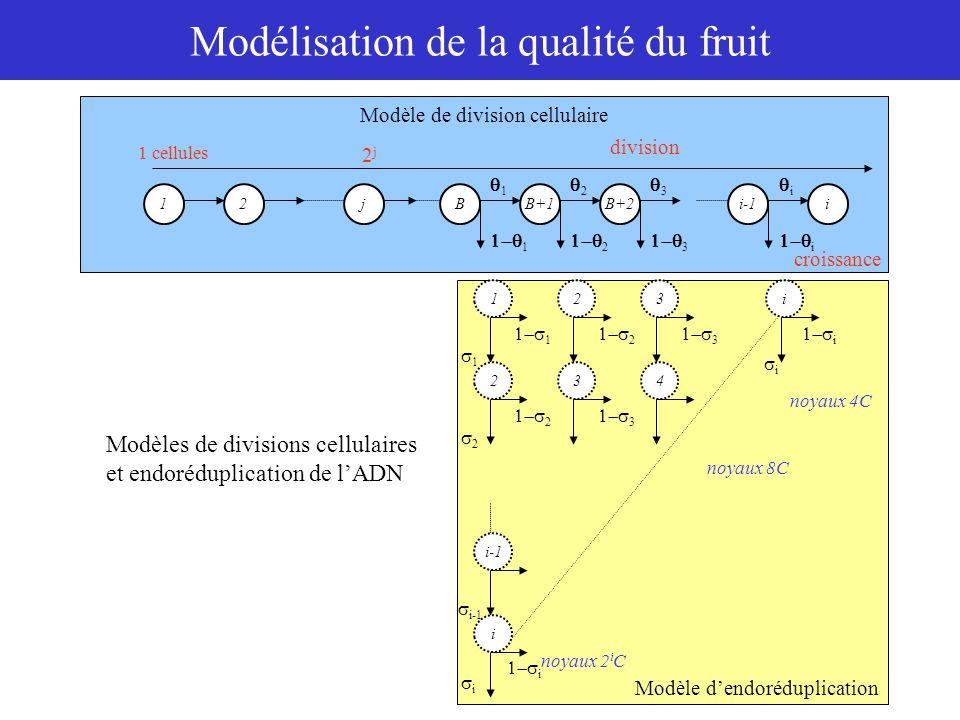 Modélisation de la qualité du fruit Teneurs en acides Fourniture C Saccharose GlucoseFructose Sorbitol Autres composés CO 2 C ph SU k2k2 Métabolisme des sucres Croissance, accumulation d'eau et de carbone