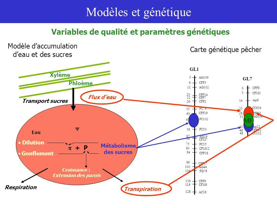 Modèles et génétique Quels paramètres pour rendre compte du contrôle génétique sur les variables de qualité .