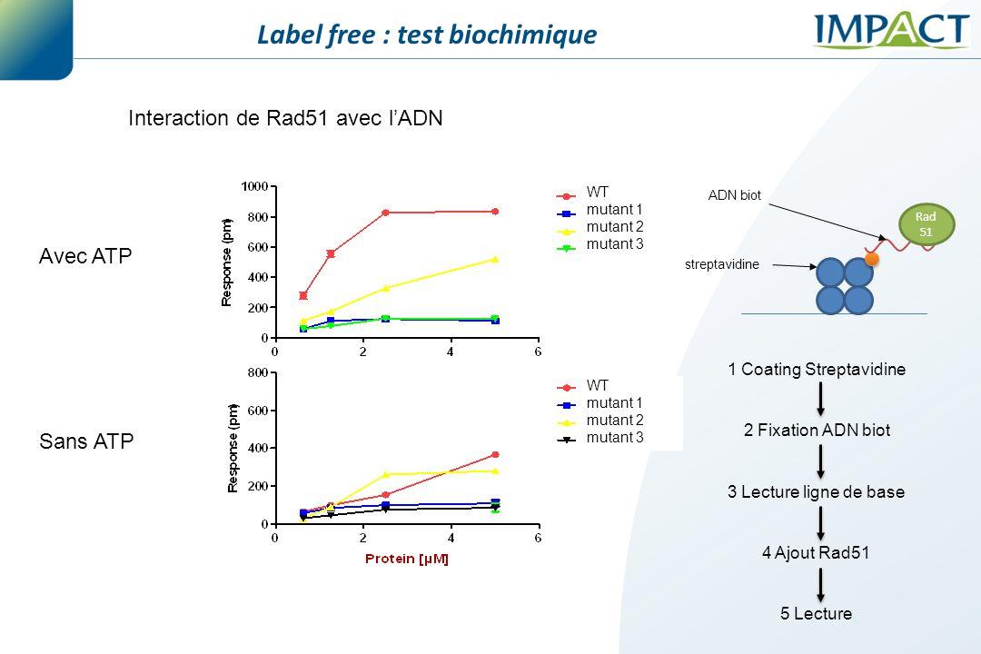 WT mutant 1 mutant 2 mutant 3 WT mutant 1 mutant 2 mutant 3 Avec ATP Sans ATP Interaction de Rad51 avec l'ADN Label free : test biochimique 1 Coating