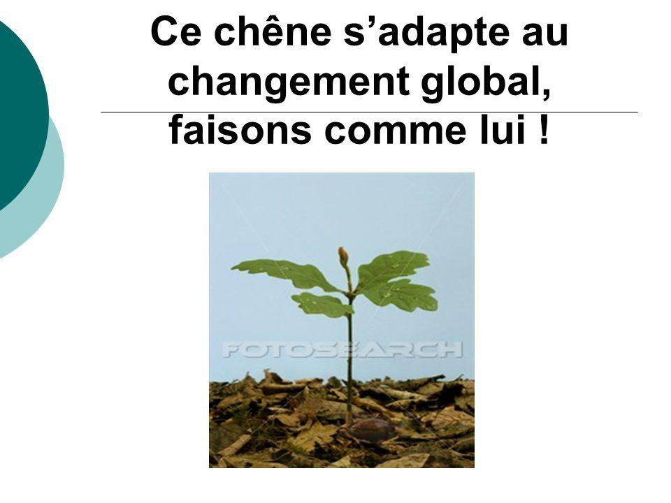 Ce chêne s'adapte au changement global, faisons comme lui !