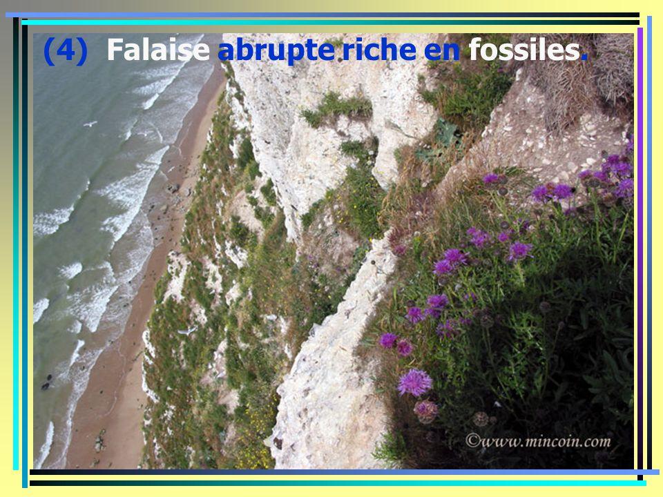 (3) Le cap blanc nez, la plage d'Escales