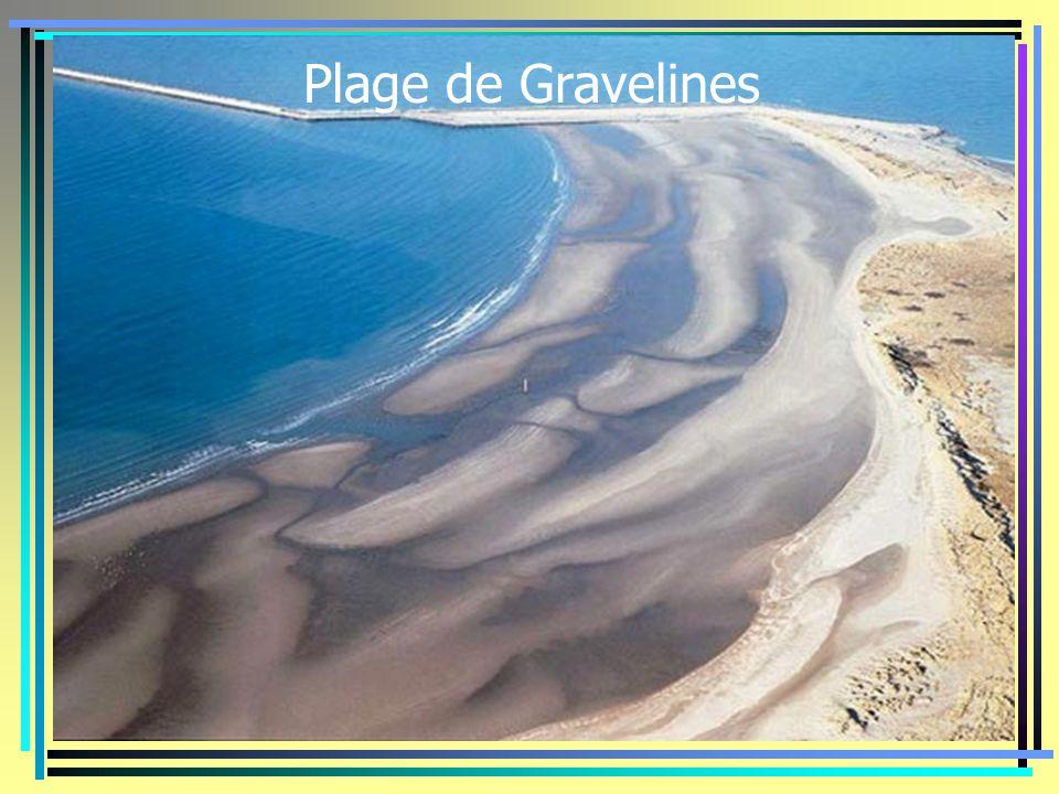 Plage de Gravelines