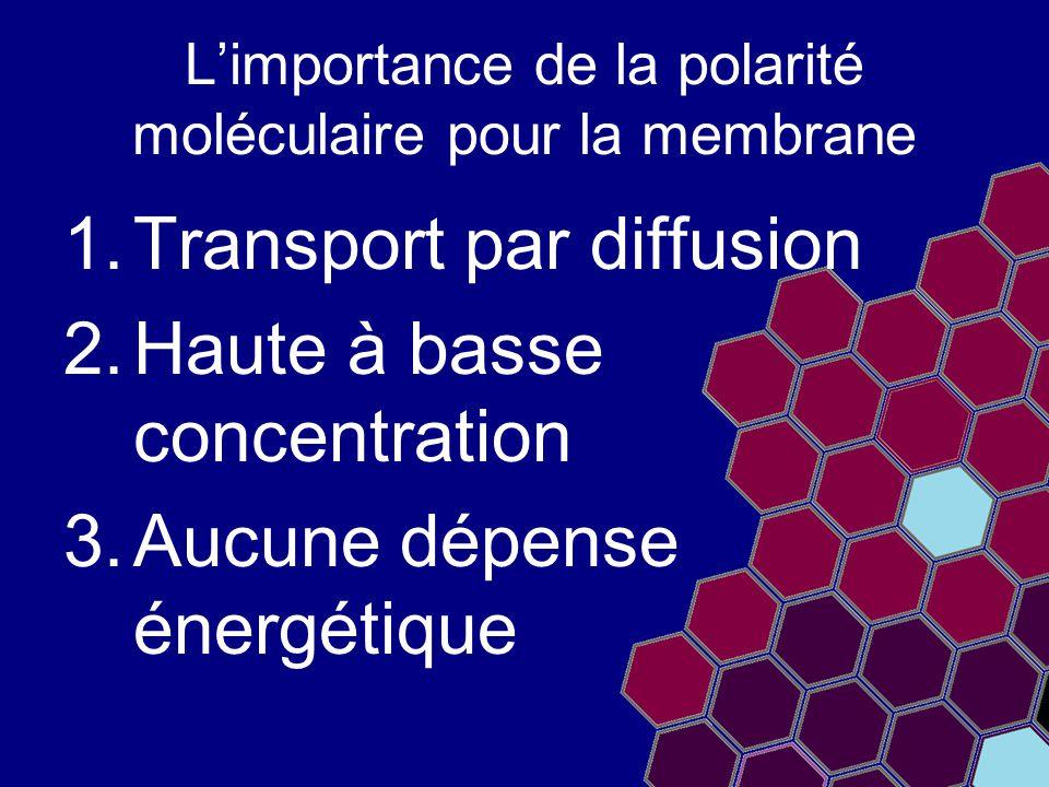 L'importance de la polarité moléculaire pour la membrane 1.Transport par diffusion 2.Haute à basse concentration 3.Aucune dépense énergétique