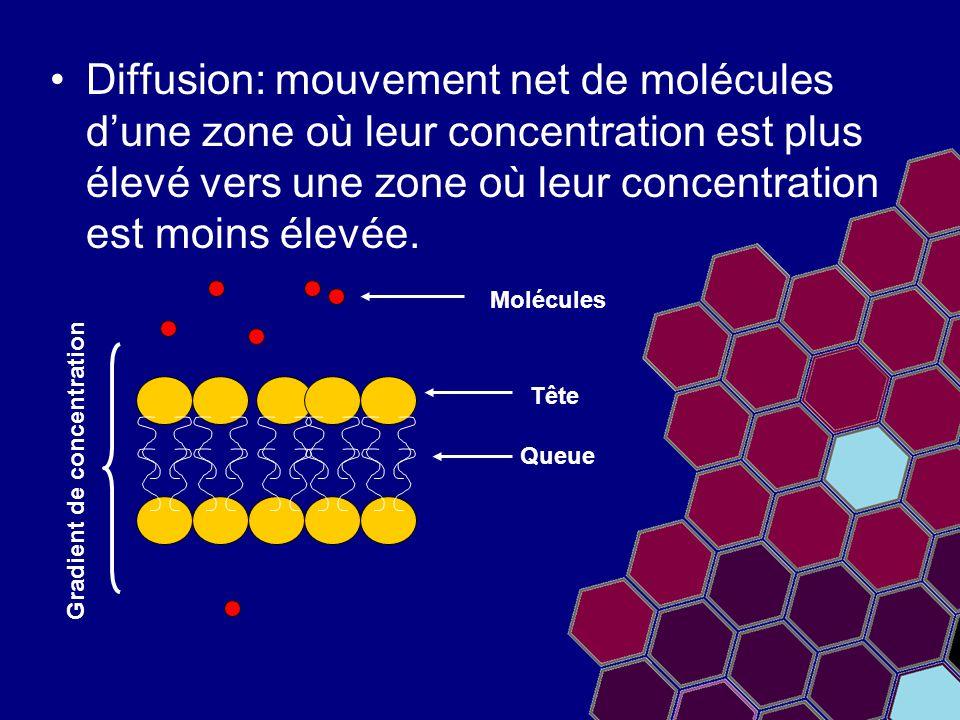 Diffusion: mouvement net de molécules d'une zone où leur concentration est plus élevé vers une zone où leur concentration est moins élevée. Queue Tête