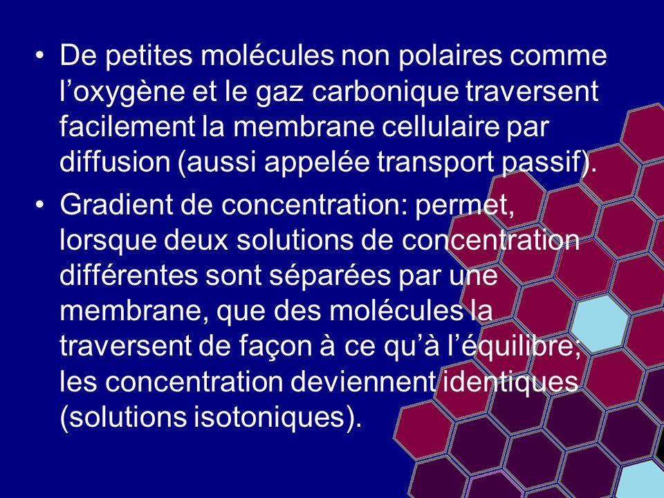 De petites molécules non polaires comme l'oxygène et le gaz carbonique traversent facilement la membrane cellulaire par diffusion (aussi appelée trans