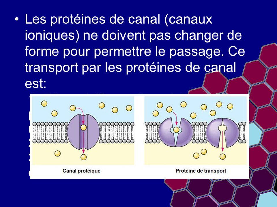 Les protéines de canal (canaux ioniques) ne doivent pas changer de forme pour permettre le passage. Ce transport par les protéines de canal est: 1. Tr