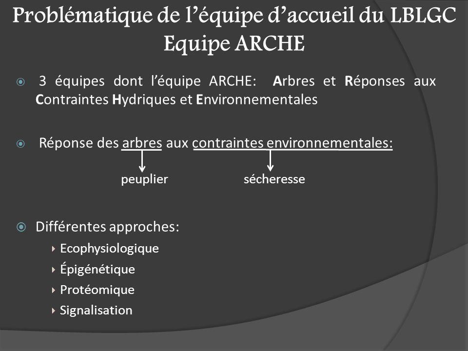 Problématique de l'équipe d'accueil du LBLGC Equipe ARCHE  3 équipes dont l'équipe ARCHE: Arbres et Réponses aux Contraintes Hydriques et Environnementales  Réponse des arbres aux contraintes environnementales:  Différentes approches: Ecophysiologique Épigénétique Protéomique Signalisation sécheresse peuplier