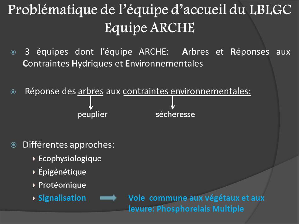Problématique de l'équipe d'accueil du LBLGC Equipe ARCHE  3 équipes dont l'équipe ARCHE: Arbres et Réponses aux Contraintes Hydriques et Environnementales  Réponse des arbres aux contraintes environnementales:  Différentes approches: Ecophysiologique Épigénétique Protéomique Signalisation Voie commune aux végétaux et aux levure: Phosphorelais Multiple sécheresse peuplier