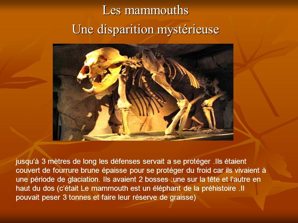 Les mammouths Une disparition mystérieuse jusqu'à 3 mètres de long les défenses servait a se protéger.Ils étaient couvert de fourrure brune épaisse po