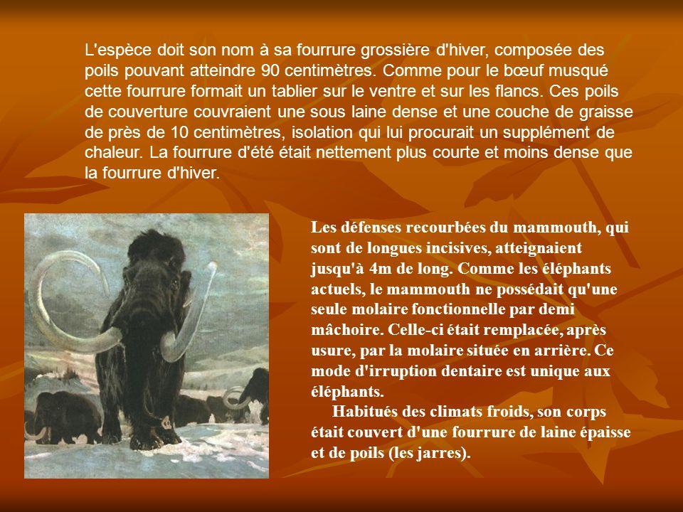 Durant environ 100 000 ans, au cours du quaternaire, le mammouth a vécu dans presque toute l Europe.