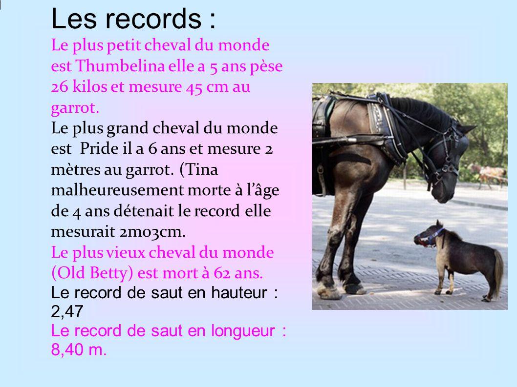 Le cheval de Przewalski est le dernier cheval sauvage au monde.