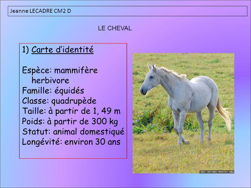 1)Carte d'identité Espèce: mammifère herbivore Famille: équidés Classe: quadrupède Taille: à partir de 1, 49 m Poids: à partir de 300 kg Statut: anima