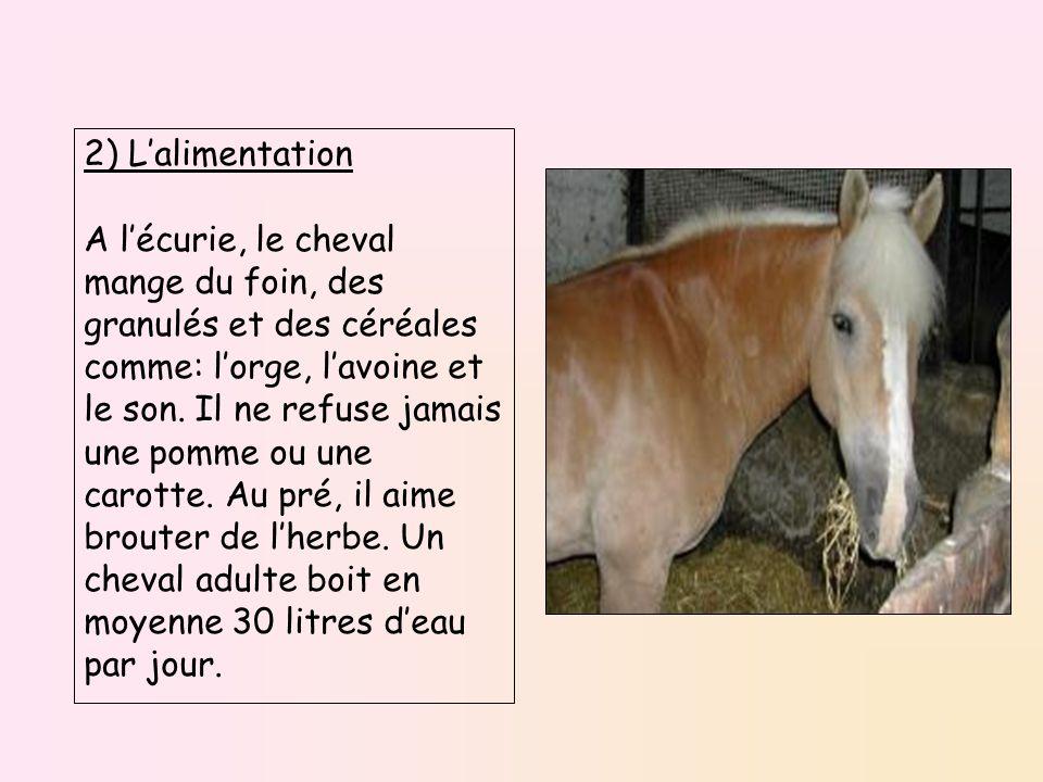 2) L'alimentation A l'écurie, le cheval mange du foin, des granulés et des céréales comme: l'orge, l'avoine et le son. Il ne refuse jamais une pomme o
