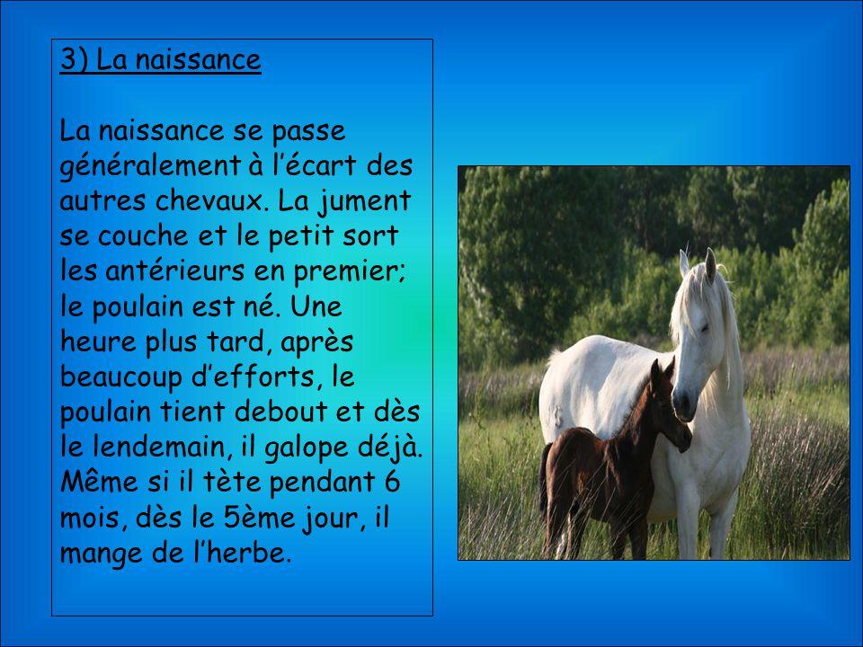 3) La naissance La naissance se passe généralement à l'écart des autres chevaux. La jument se couche et le petit sort les antérieurs en premier; le po