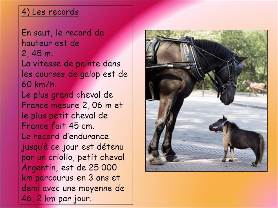4) Les records En saut, le record de hauteur est de 2, 45 m. La vitesse de pointe dans les courses de galop est de 60 km/h. Le plus grand cheval de Fr