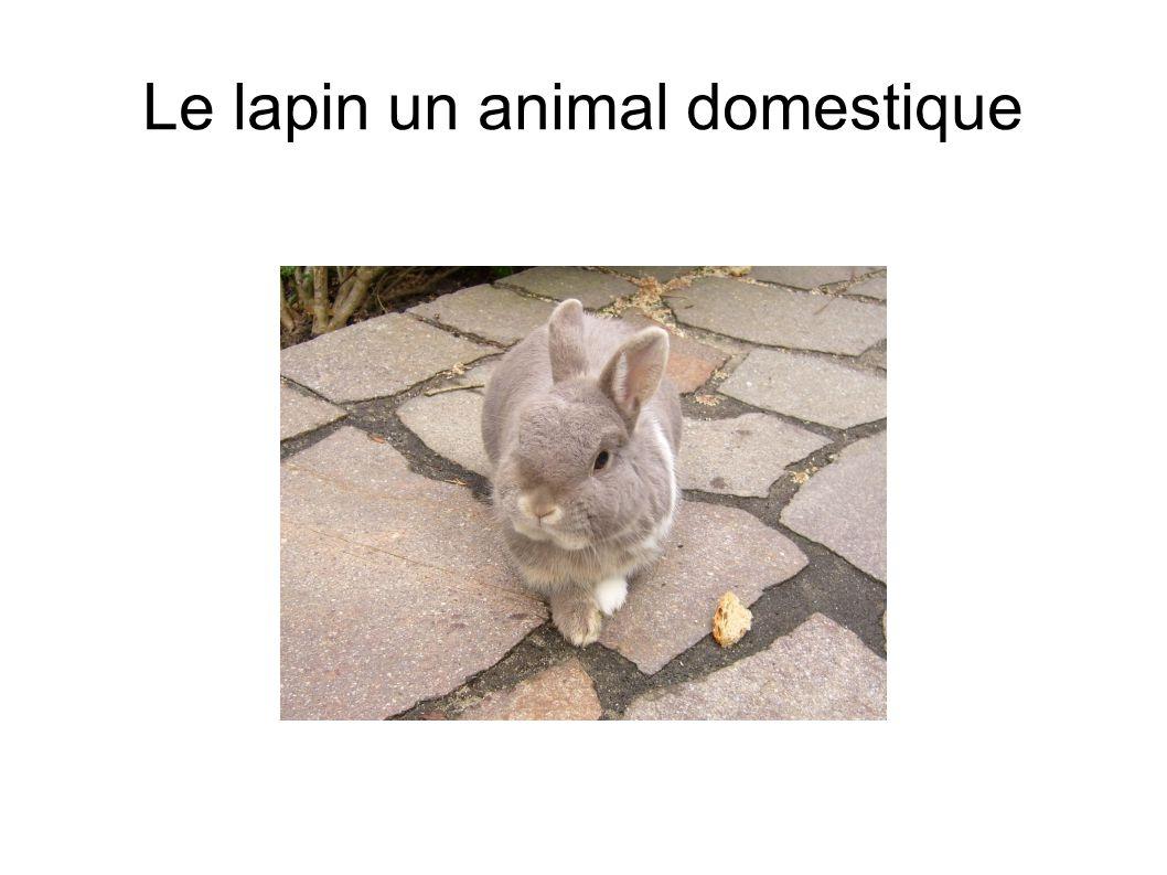 Le lapin peut se domestiquer,il vit dans une sorte de cage à la ferme,plus précisément dans un clapier.