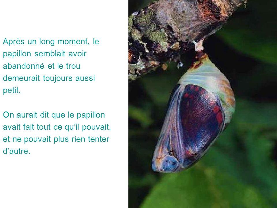 Après un long moment, le papillon semblait avoir abandonné et le trou demeurait toujours aussi petit. On aurait dit que le papillon avait fait tout ce