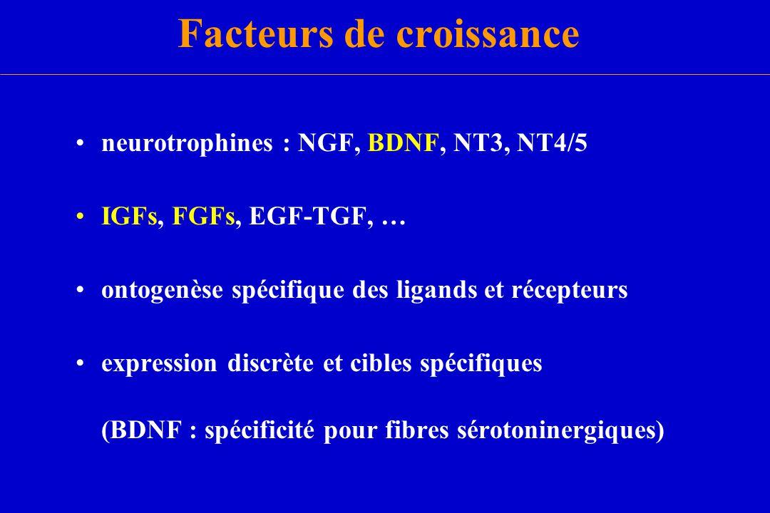 Facteurs de croissance neurotrophines : NGF, BDNF, NT3, NT4/5 IGFs, FGFs, EGF-TGF, … ontogenèse spécifique des ligands et récepteurs expression discrè