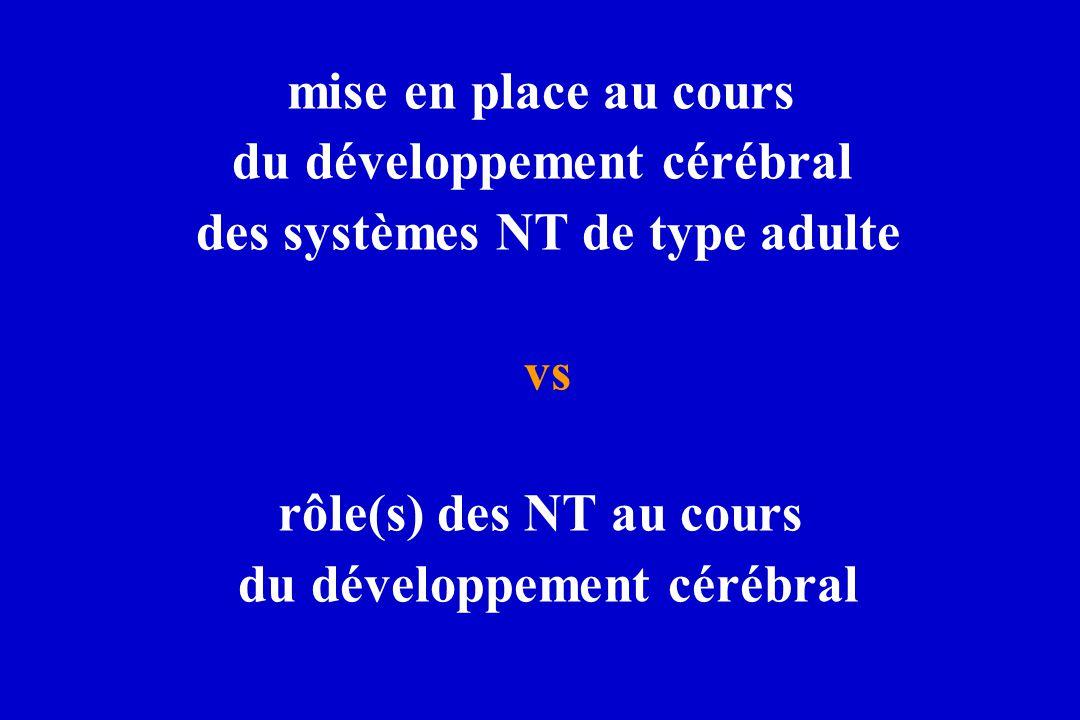mise en place au cours du développement cérébral des systèmes NT de type adulte vs rôle(s) des NT au cours du développement cérébral