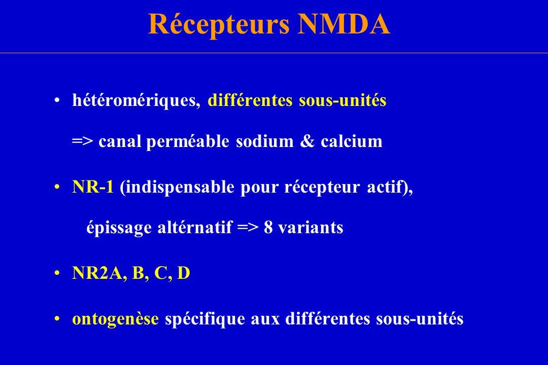 Récepteurs NMDA hétéromériques, différentes sous-unités => canal perméable sodium & calcium NR-1 (indispensable pour récepteur actif), épissage altérn
