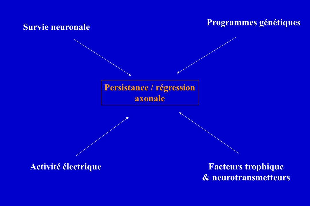Persistance / régression axonale Survie neuronale Programmes génétiques Activité électriqueFacteurs trophique & neurotransmetteurs