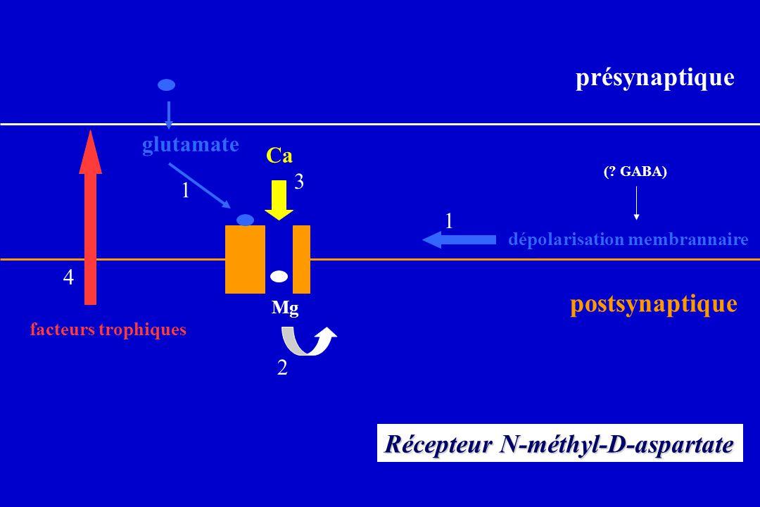 glutamate Mg Ca 1 1 3 2 dépolarisation membrannaire Récepteur N-méthyl-D-aspartate 4 facteurs trophiques présynaptique postsynaptique (? GABA)