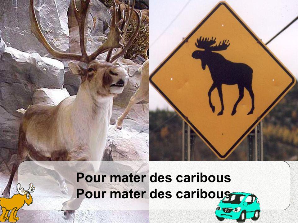 Pour mater des caribous