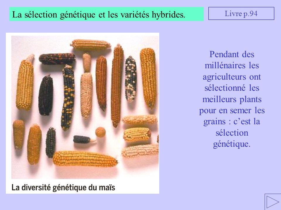 La sélection génétique et les variétés hybrides. Livre p.94 Pendant des millénaires les agriculteurs ont sélectionné les meilleurs plants pour en seme