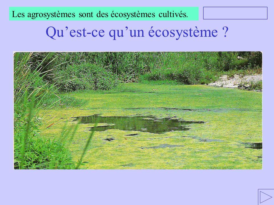 Les agrosystèmes sont des écosystèmes cultivés.Qu'est-ce qu'un écosystème .