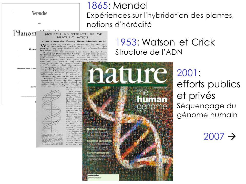 1953: Watson et Crick Structure de l'ADN 1865: Mendel Expériences sur l hybridation des plantes, notions d hérédité 2001: efforts publics et privés Séquençage du génome humain 2007 