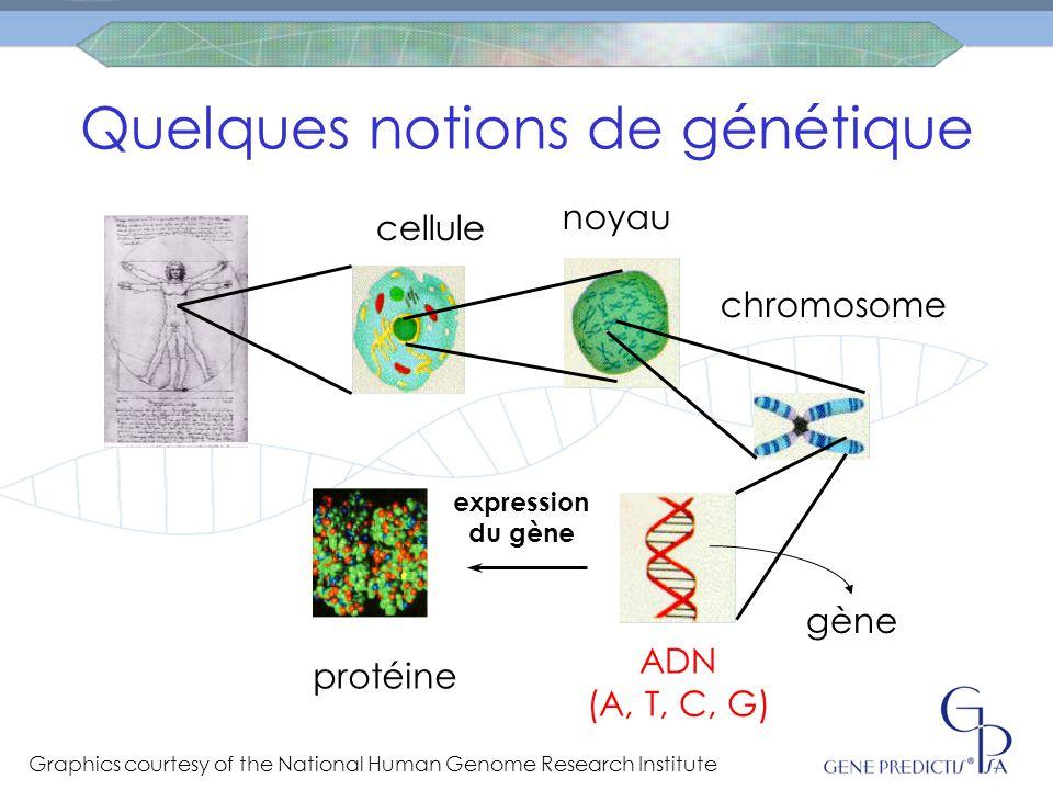 C CTC T T Deux gènes normaux  activité normale de la protéine Un gène normal et un avec la variation  activité intermédiaire de la protéine Deux gènes variés  activité lente de la protéine de la mèredu père