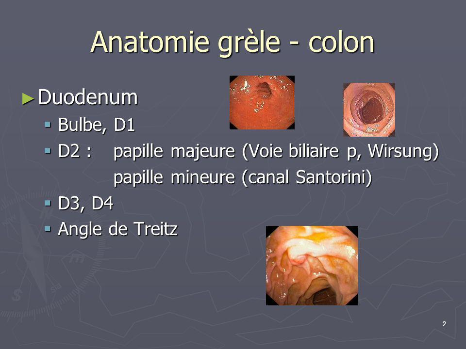 2 Anatomie grèle - colon ► Duodenum  Bulbe, D1  D2 : papille majeure (Voie biliaire p, Wirsung) papille mineure (canal Santorini)  D3, D4  Angle d