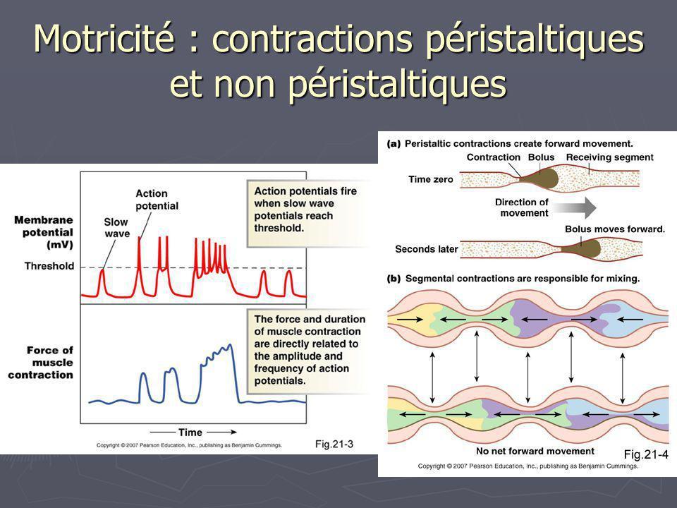 21 Motricité : contractions péristaltiques et non péristaltiques