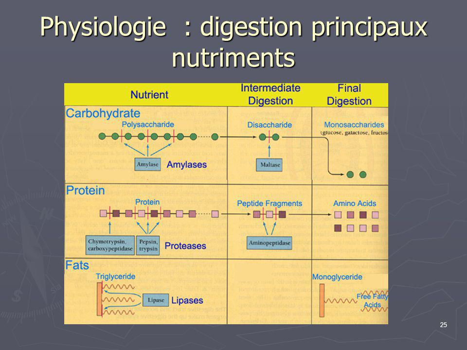 25 Physiologie : digestion principaux nutriments
