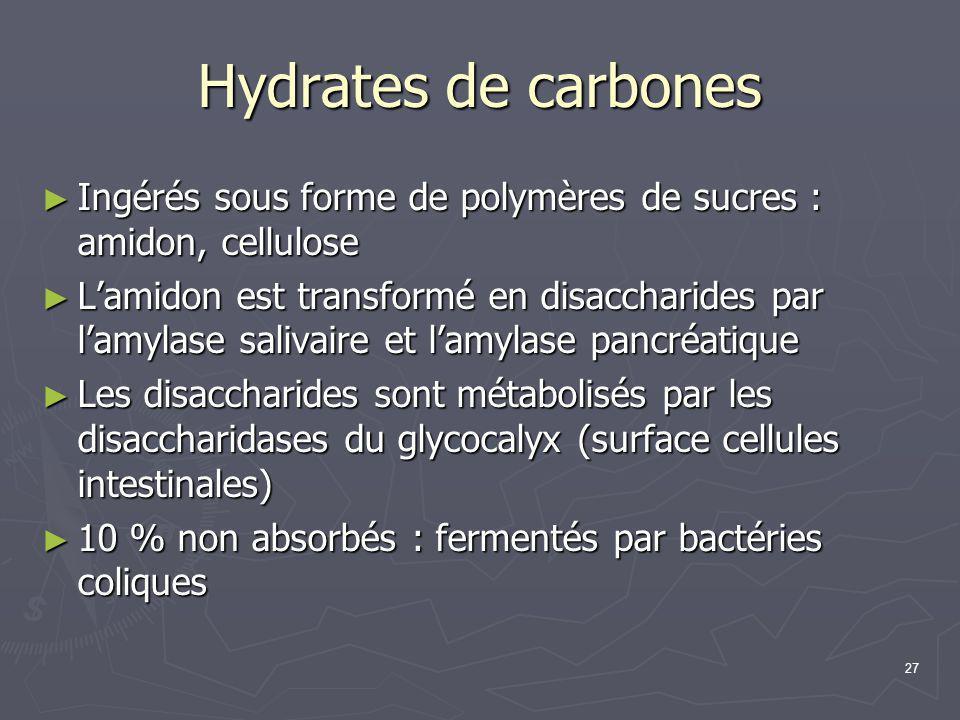 27 Hydrates de carbones ► Ingérés sous forme de polymères de sucres : amidon, cellulose ► L'amidon est transformé en disaccharides par l'amylase saliv